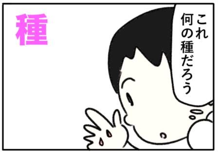 seed(種、子孫)
