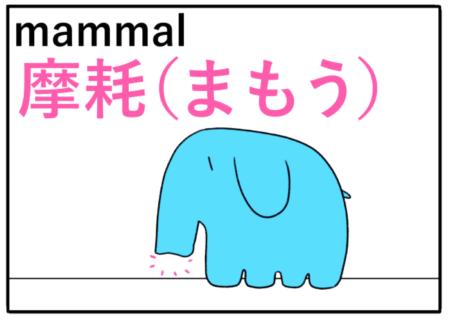 mammal(哺乳類)