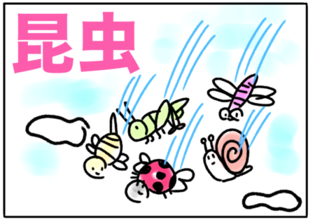 insect(昆虫)