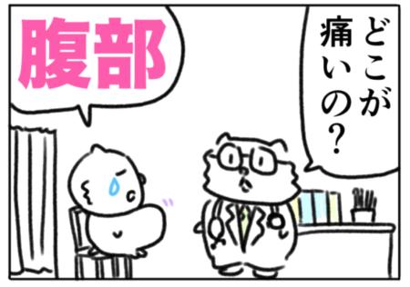 belly(腹部)